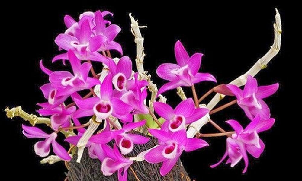 Gốc hoa lan tím đẹp mắt
