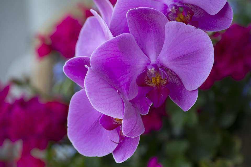 Hình chụp hoa lan tím cực gần