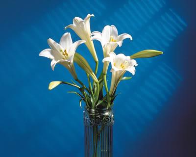 Hoa huệ trắng cắm trong bình thủy tinh