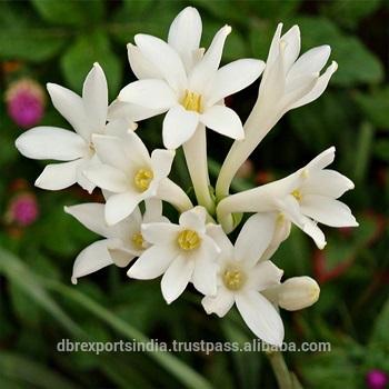 Hoa huệ trắng đẹp