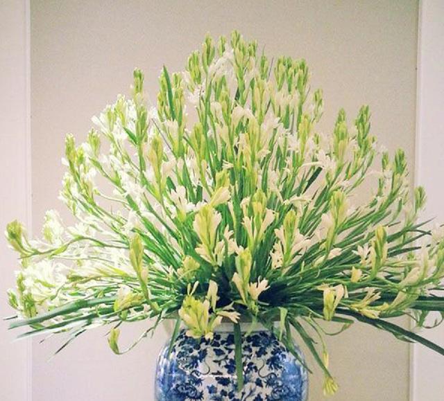 Hoa huệ trắng vu lan cực đẹp