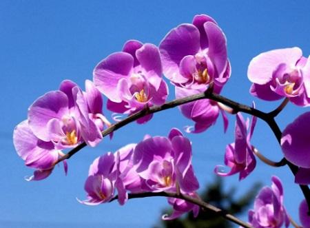 Hoa lan tím cực đẹp dưới ánh nắng