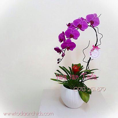Hoa lan tím cực đẹp
