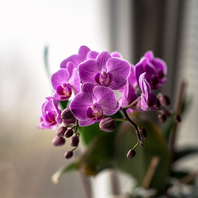 Hoa lan tím đẹp ơi là đẹp mắt
