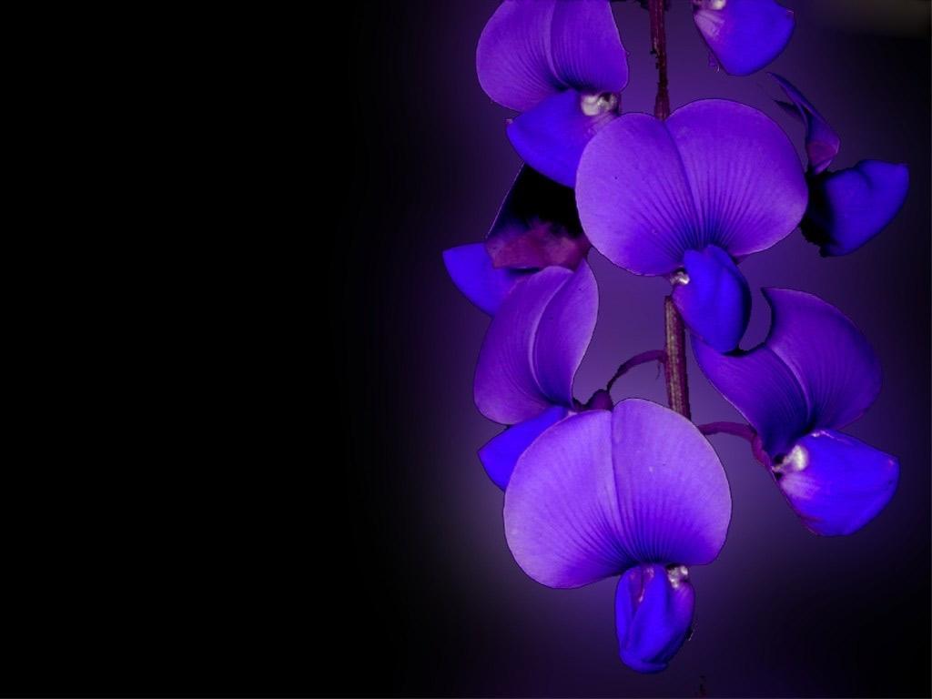 Hoa lan tím tỏa ra ánh tím cực đẹp