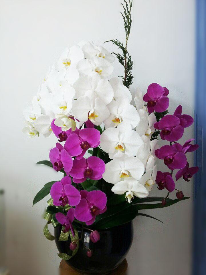 Hoa lan tím và hoa lan trắng cùng cắm một lọ