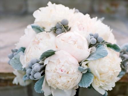 Hoa mẫu đơn trắng cô dâu đẹp mắt