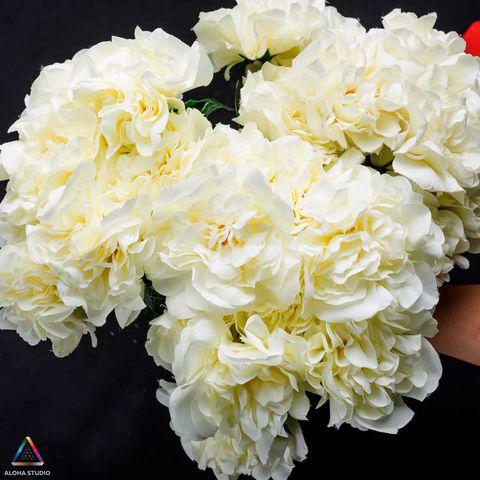Hoa mẫu đơn trắng để cùng một chỗ rất đẹp
