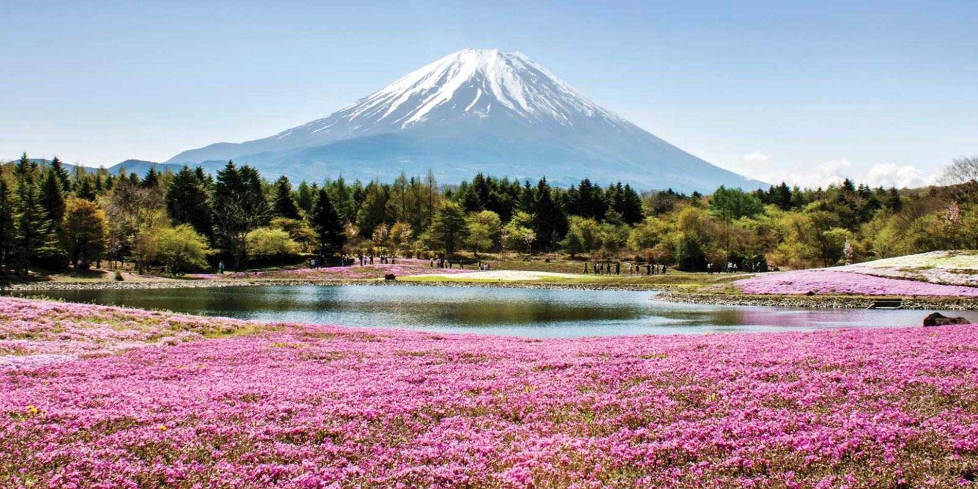 Mùa xuân về núi Phú Sĩ Nhật Bản lại trở nên đẹp hơn bao giờ hết