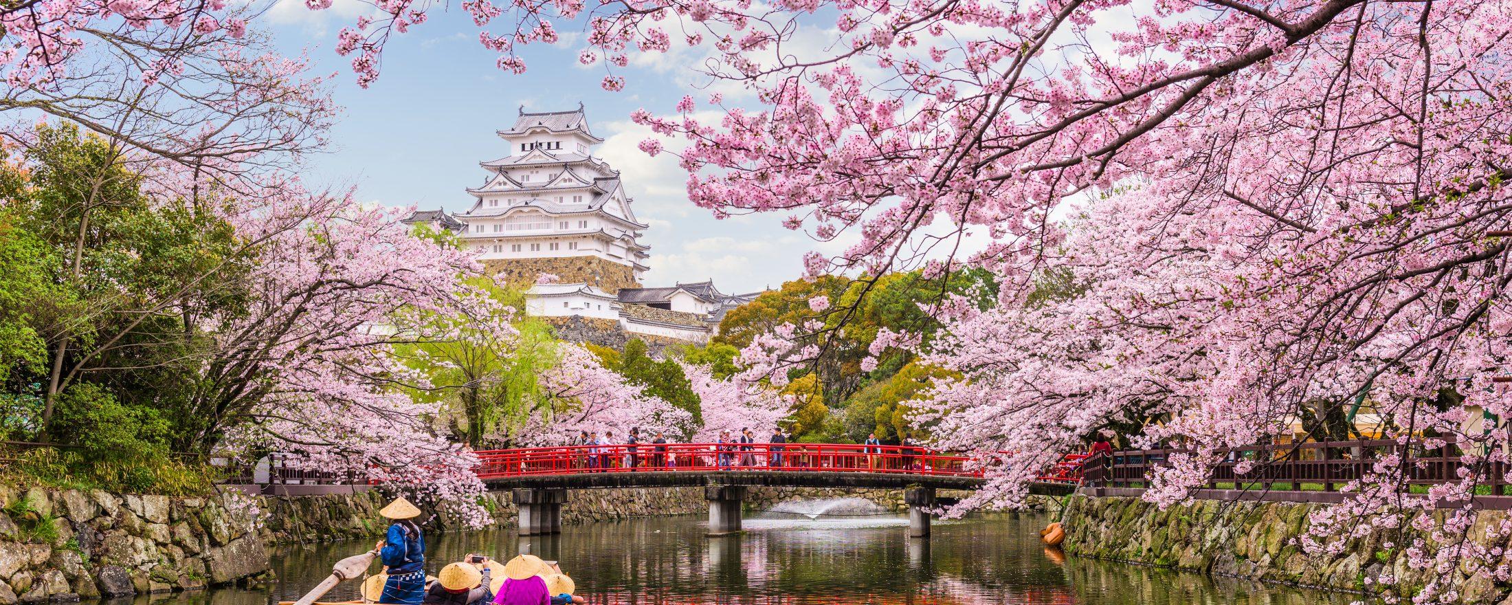Nhật và hoa anh đào rất đẹp