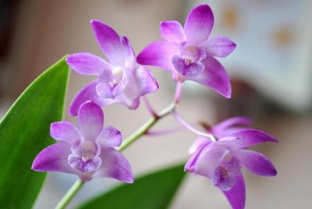 Những bông hoa lan tím đẹp mắt