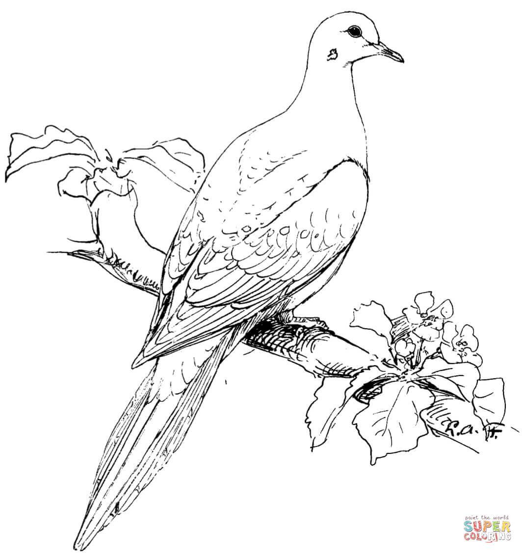 Tranh tô màu chim bồ câu đậu cành