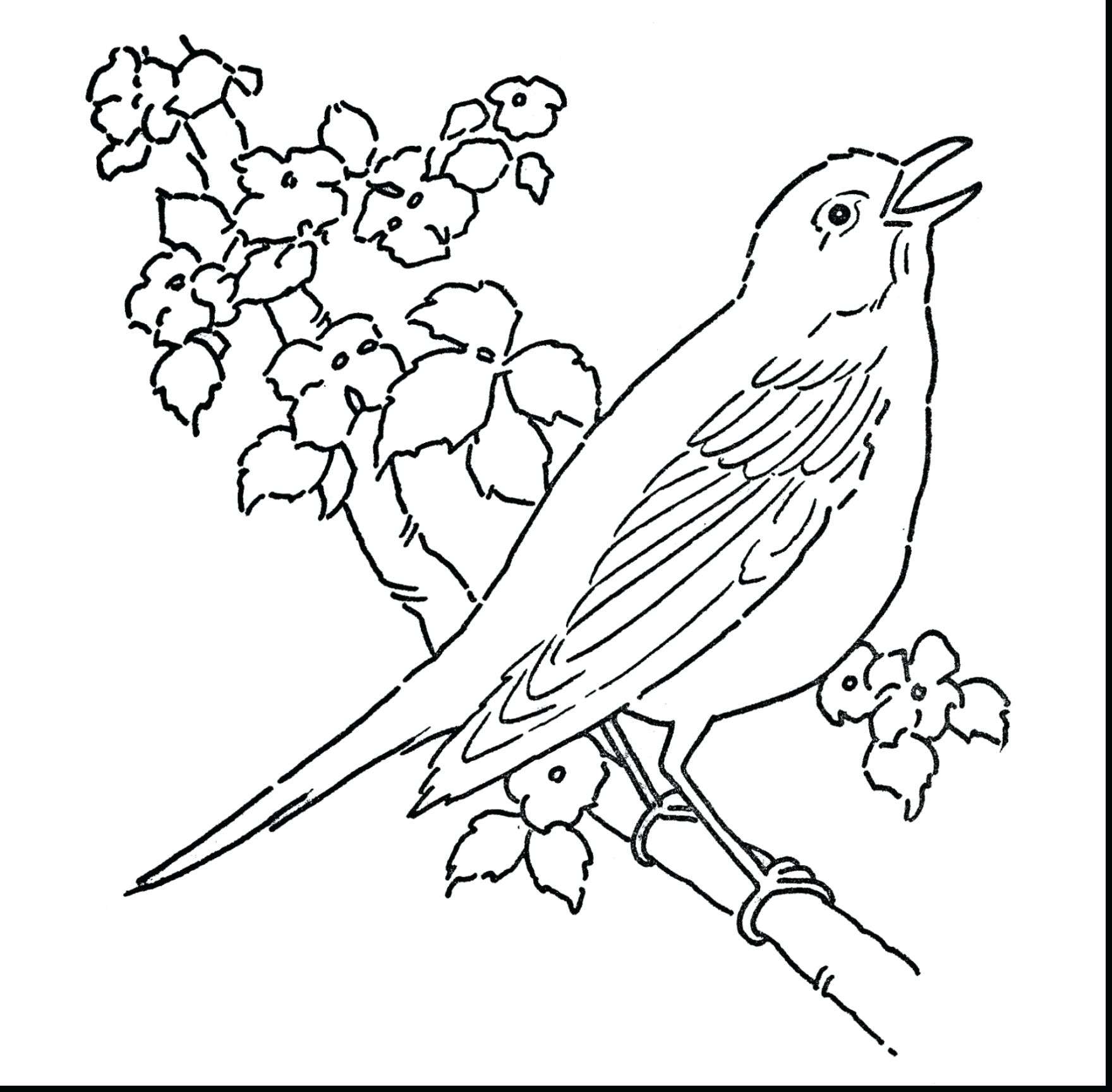 Tranh tô màu chim đuậ cành cây hót vang