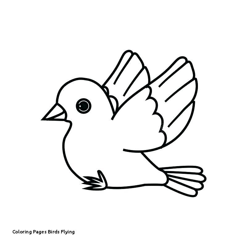 Tranh tô màu chim tung cánh