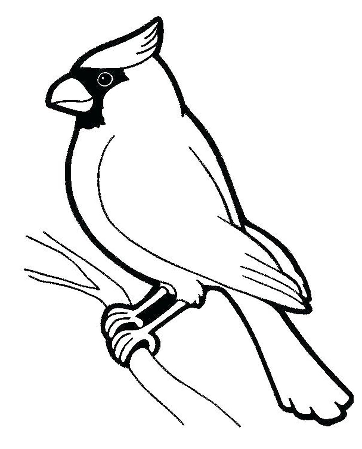 Tranh tô màu con chim bird