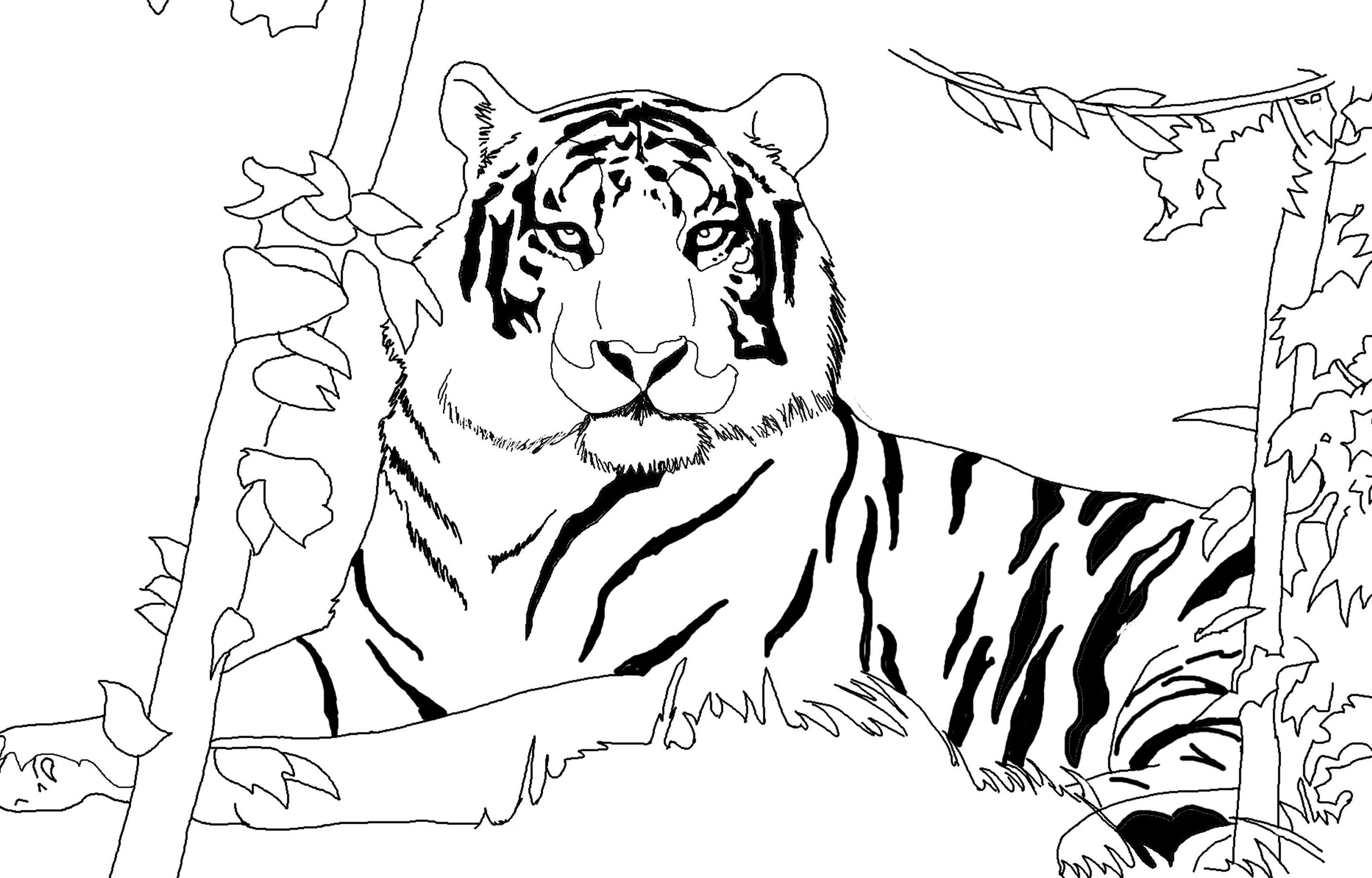 Tranh tô màu con hổ dành cho bé