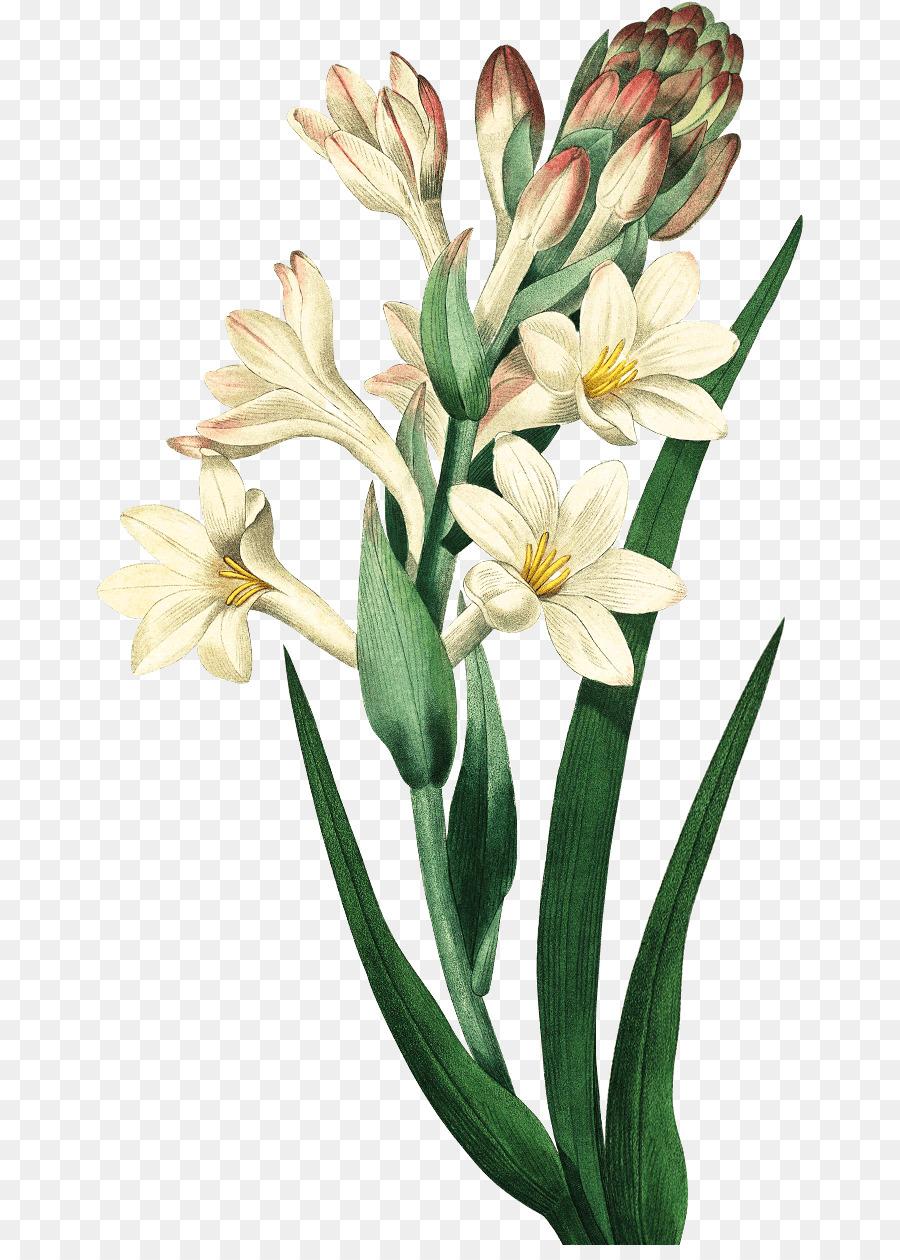 Tranh vẽ hoa huệ cực đẹp
