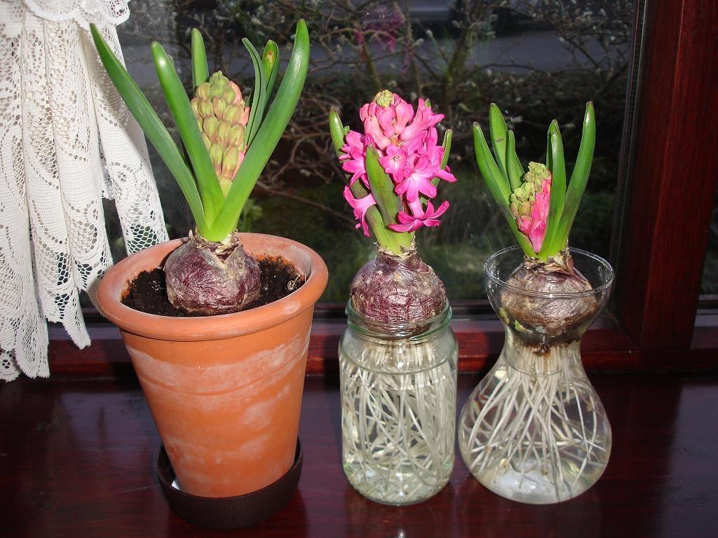Ba loại hoa tiên ông màu sắc khác nhau