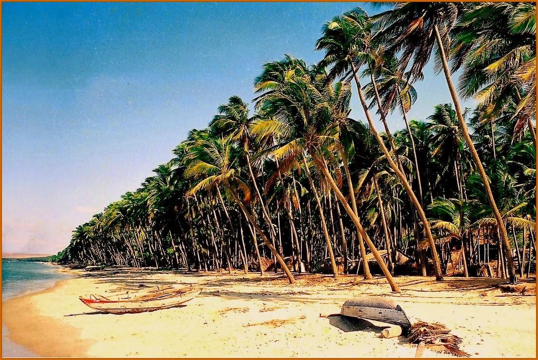 Bãi biển hàng dừa cực đẹp