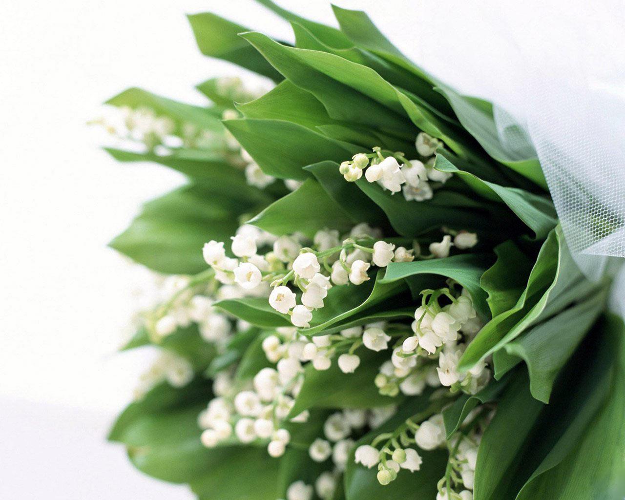 Bó hoa lan chuông trắng dùng để tặng quà ý nghĩa