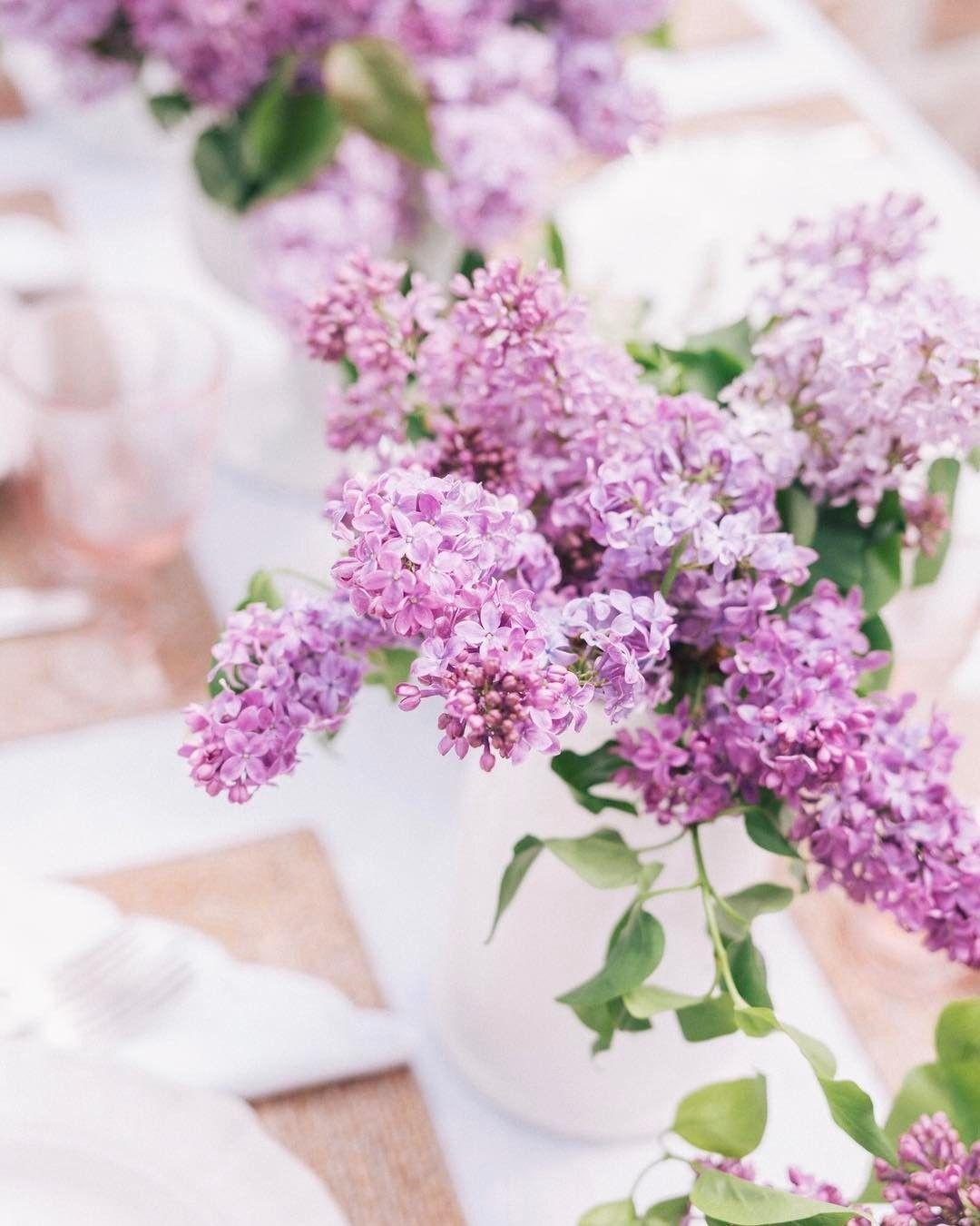 Bụi hoa tử đinh hương cực đẹp