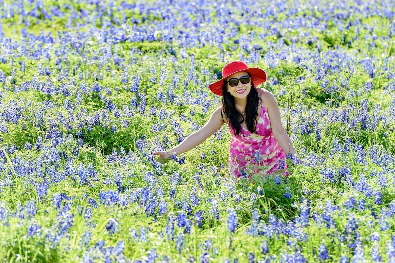 Cả một vườn hoa tử đinh hương xinh đẹp
