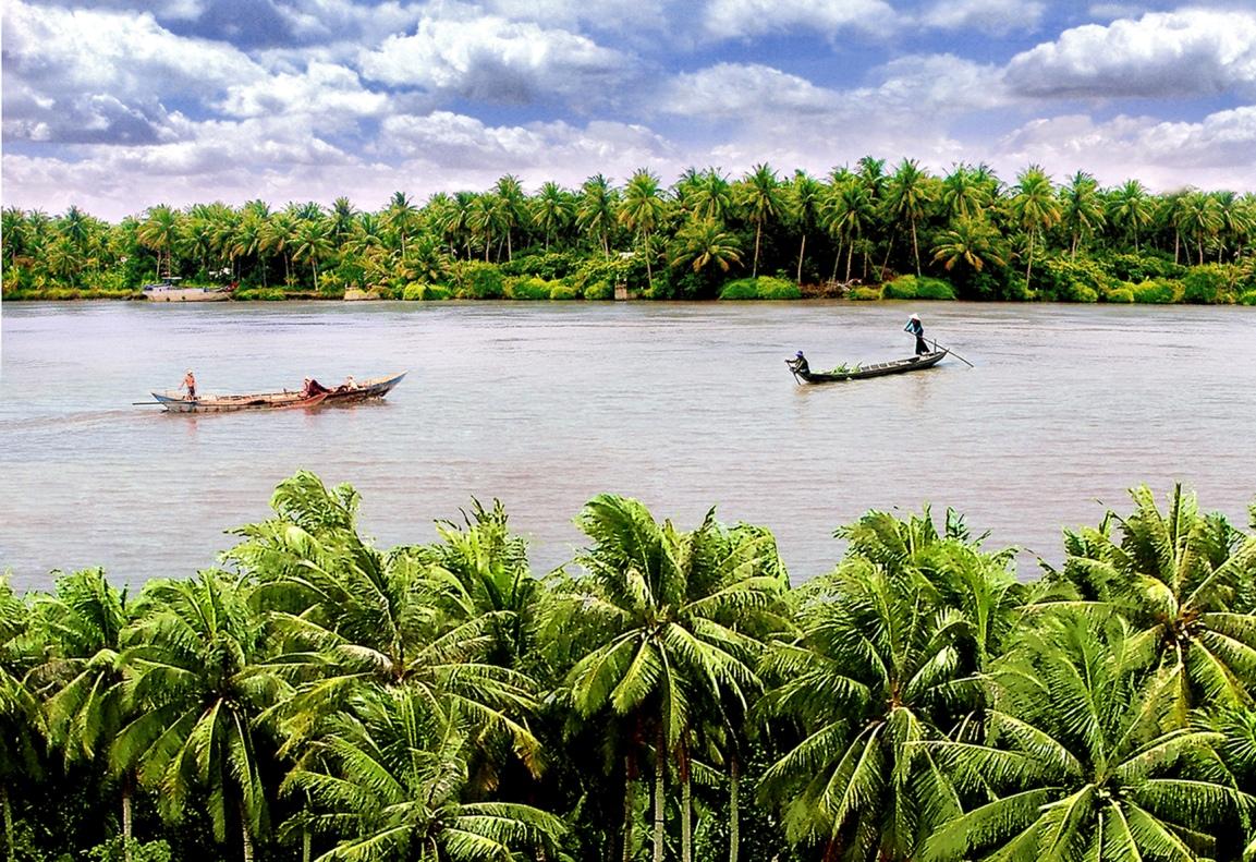 Cây dừa Bến Tre cạnh bờ sông