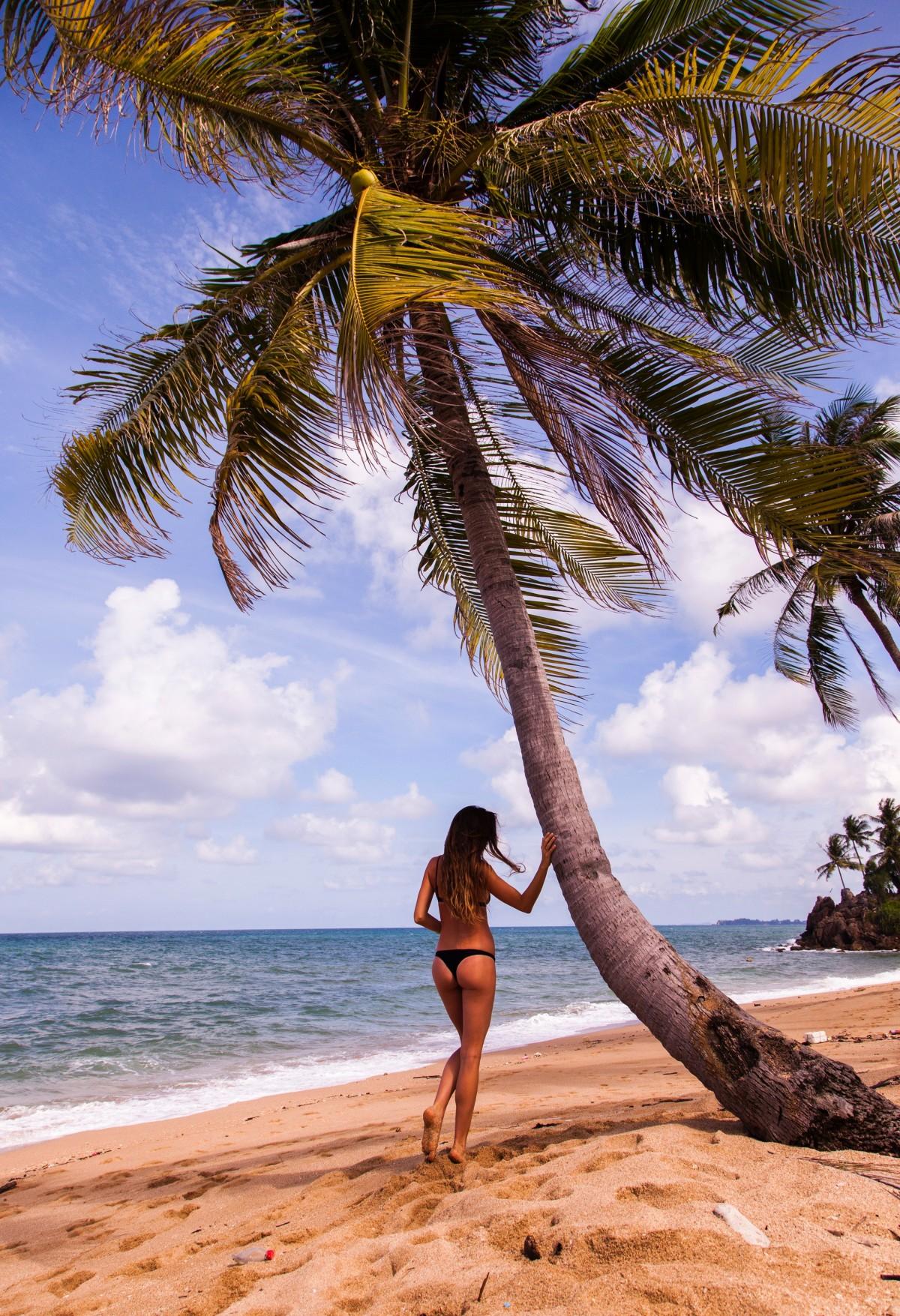 Cây dừa biển và người đẹp áo tắm