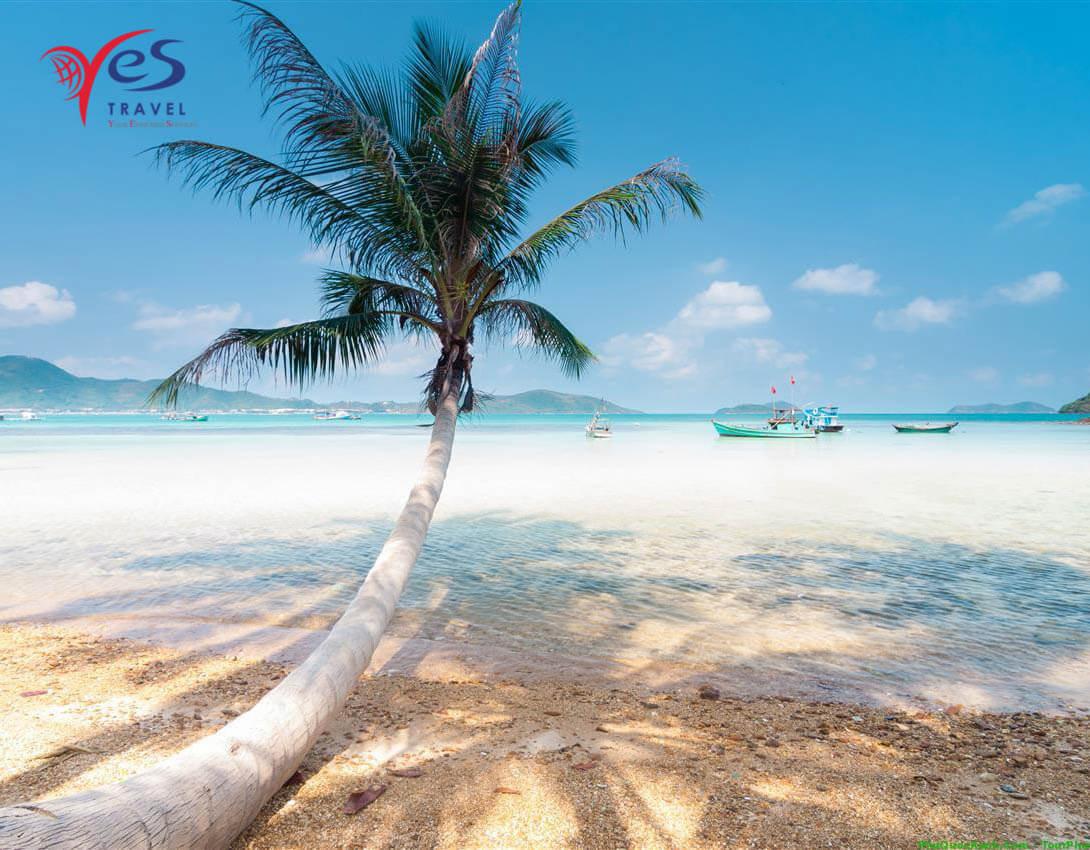 Cây dừa biển vươn mình ra biển