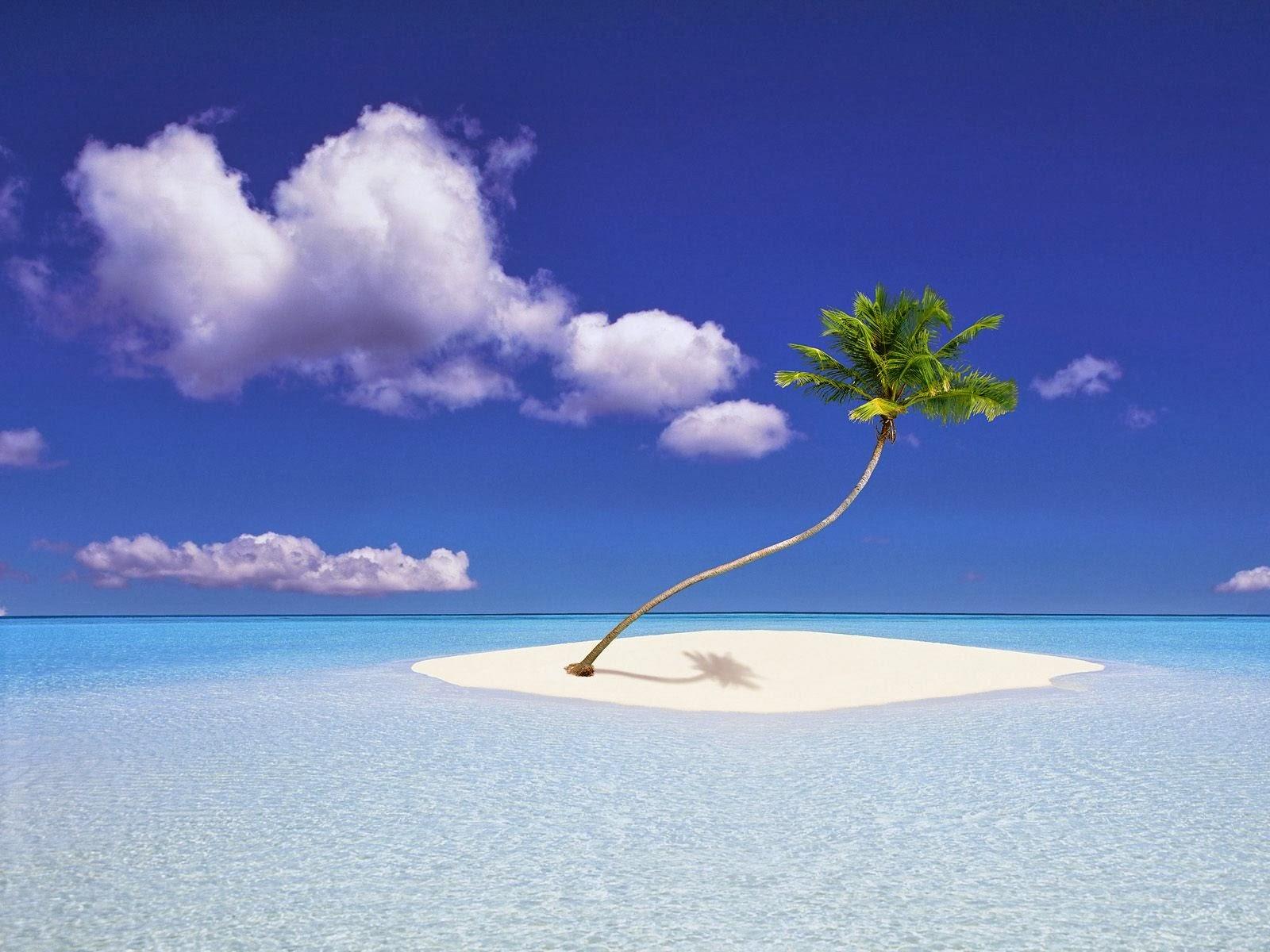 Cây dừa cô độc giữa đảo hoang