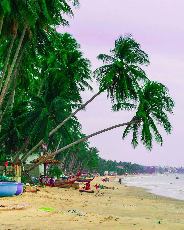 Cây dừa nghiêng mình vươn ra bờ cát