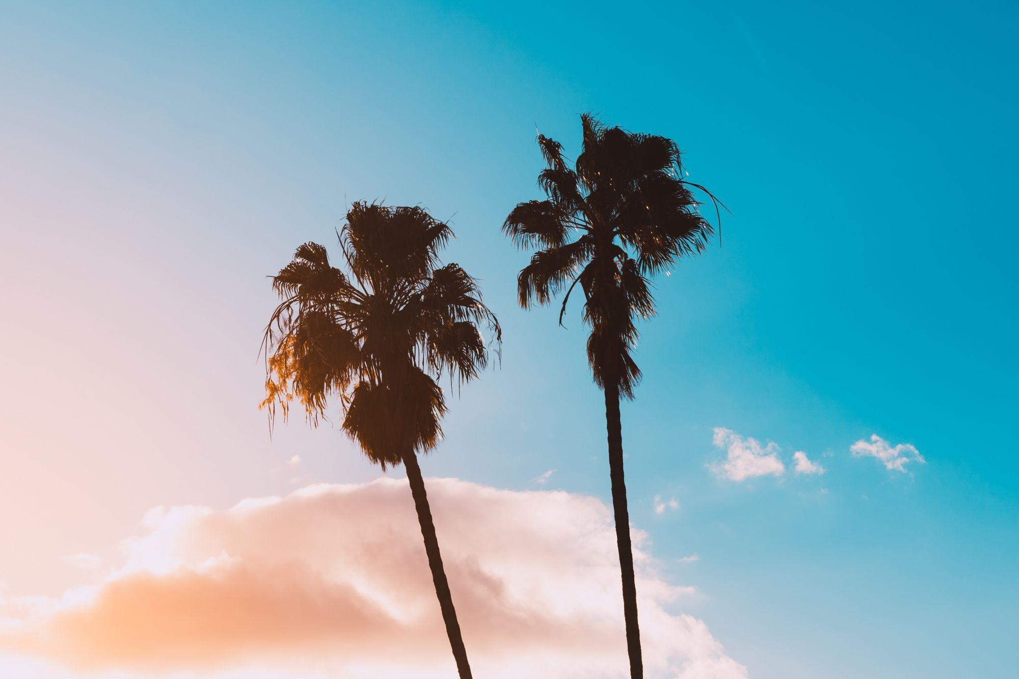 Cây dừa trên bãi biển mùa hè