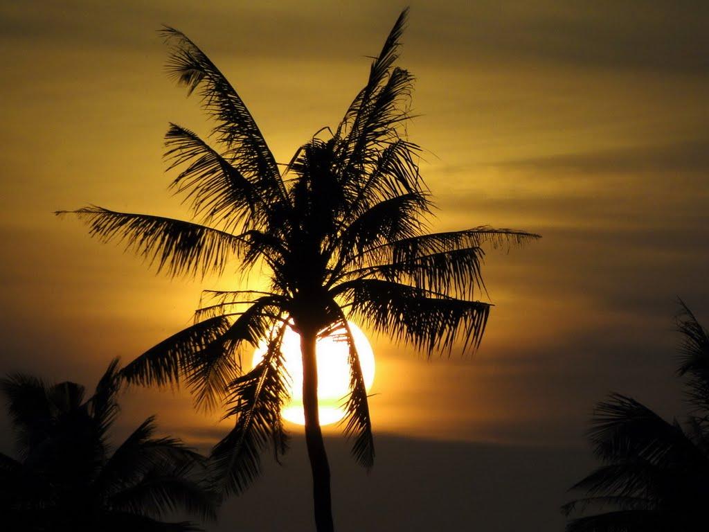 Cây dừa trong ánh hoàng hôn