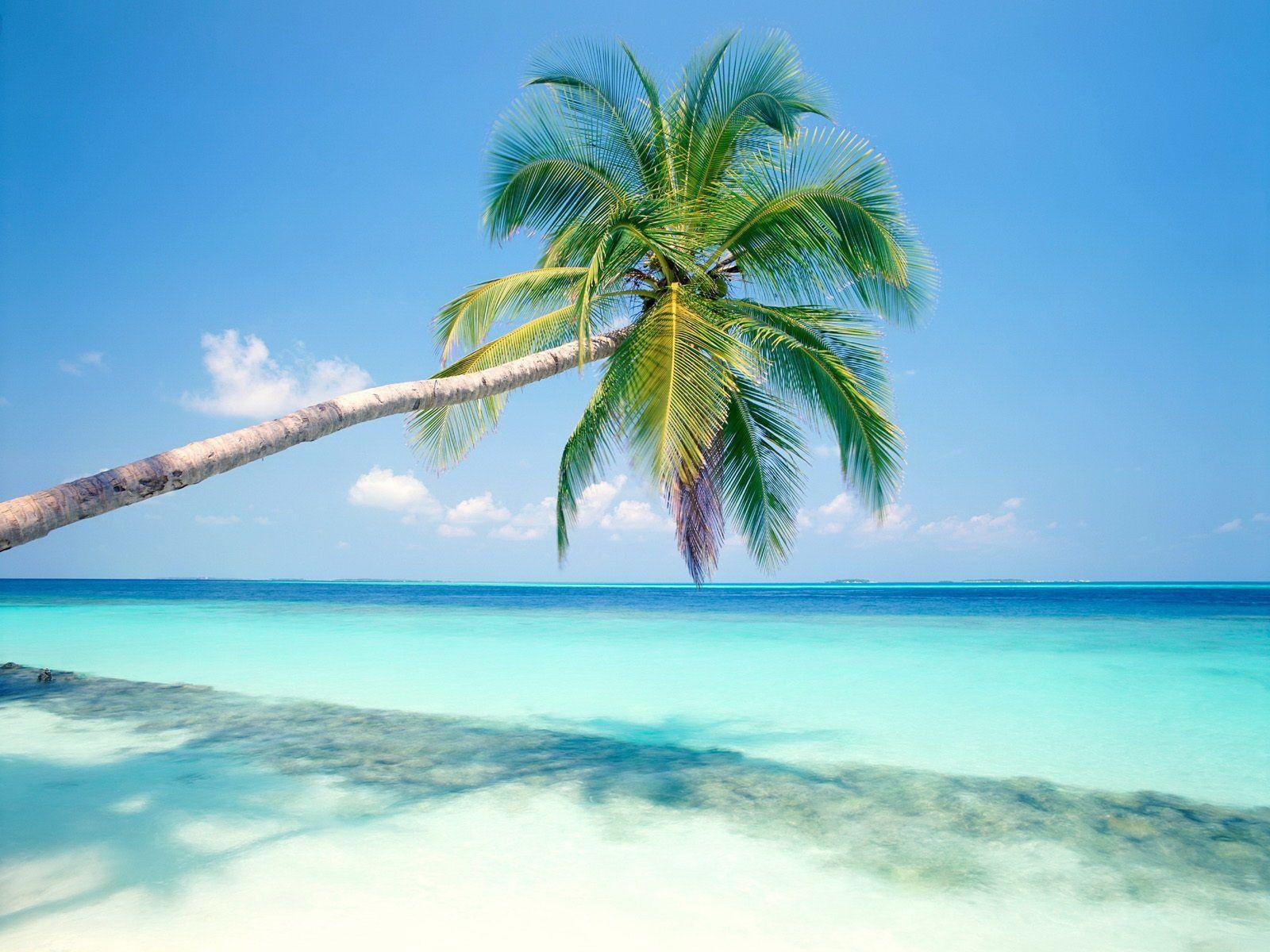 Cây dừa và biển xanh