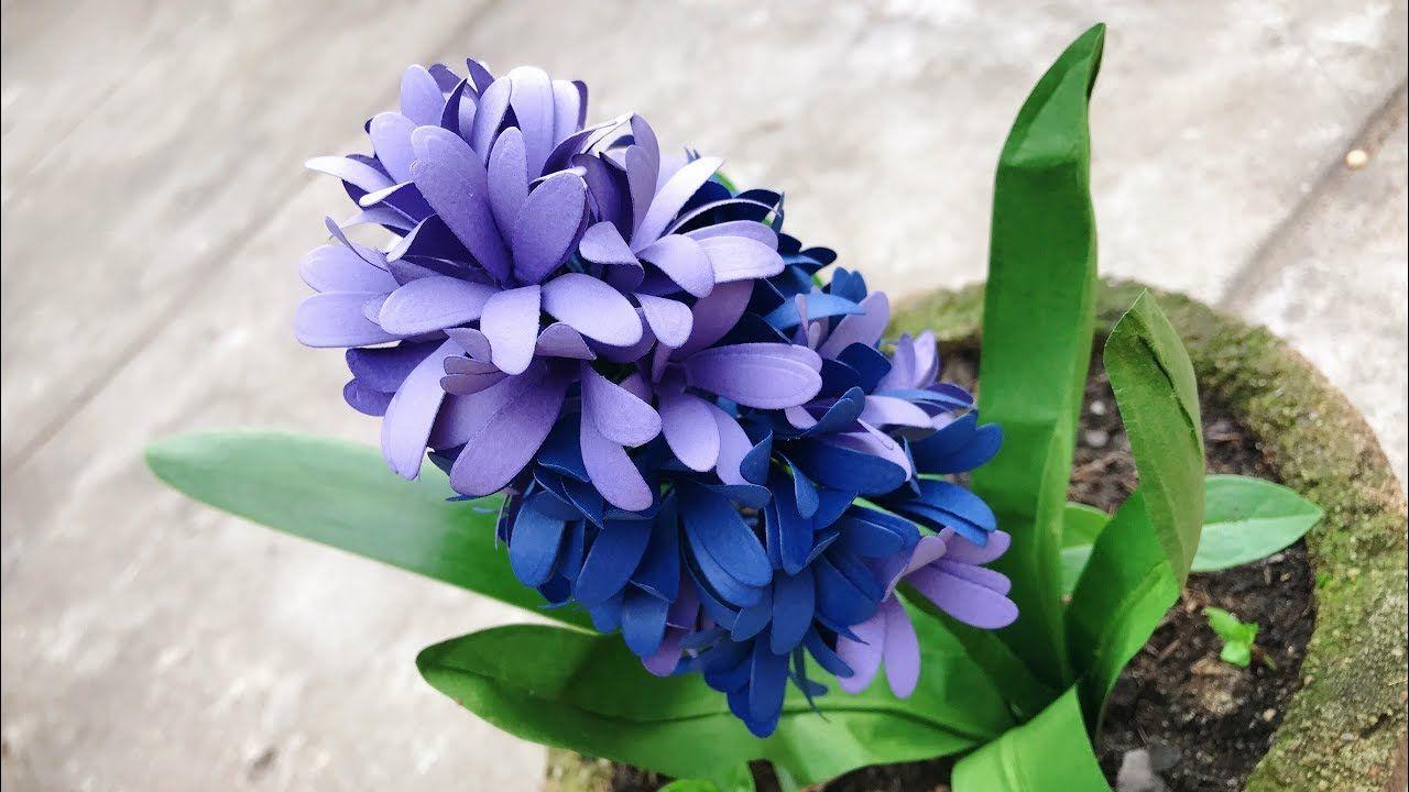 Chậu hoa tiên ông màu sắc xinh đẹp