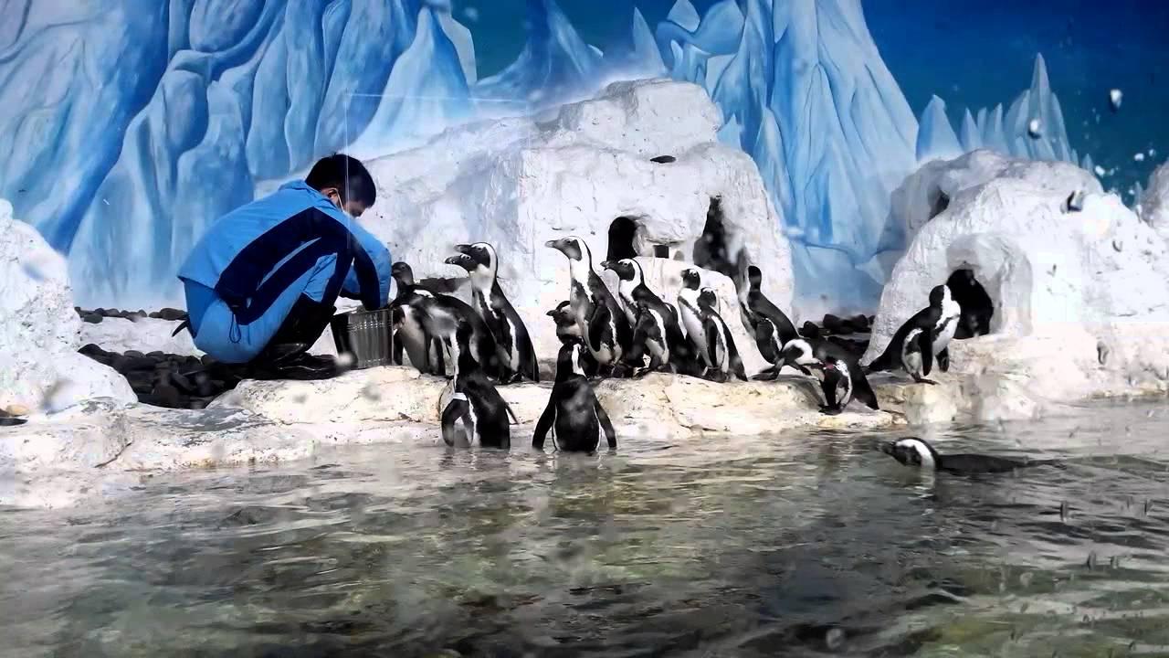Chim cánh cụt ở thủy cung