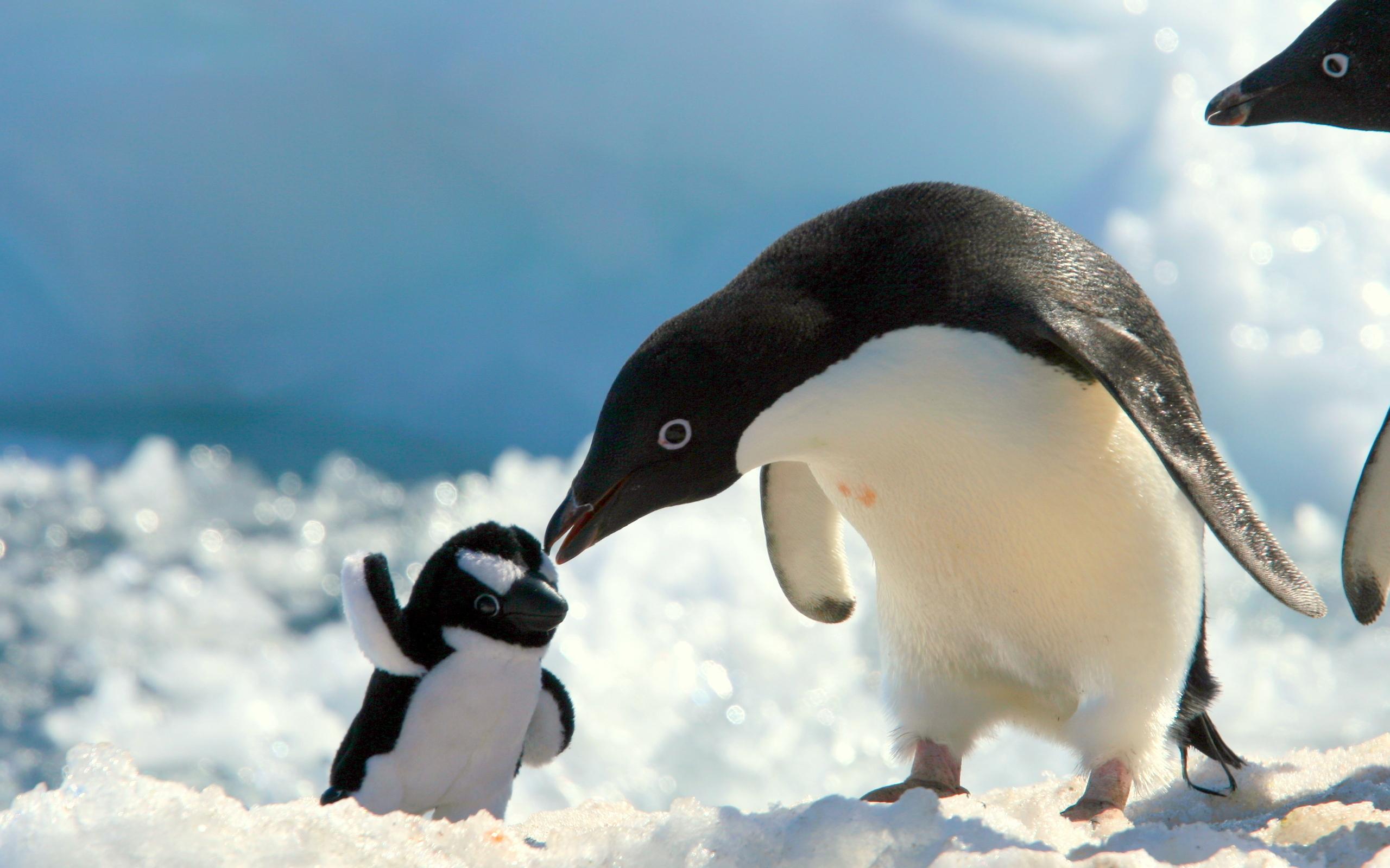Chú chim cánh cụt rất dễ thương khi nhìn thấy hình cánh cụt bông