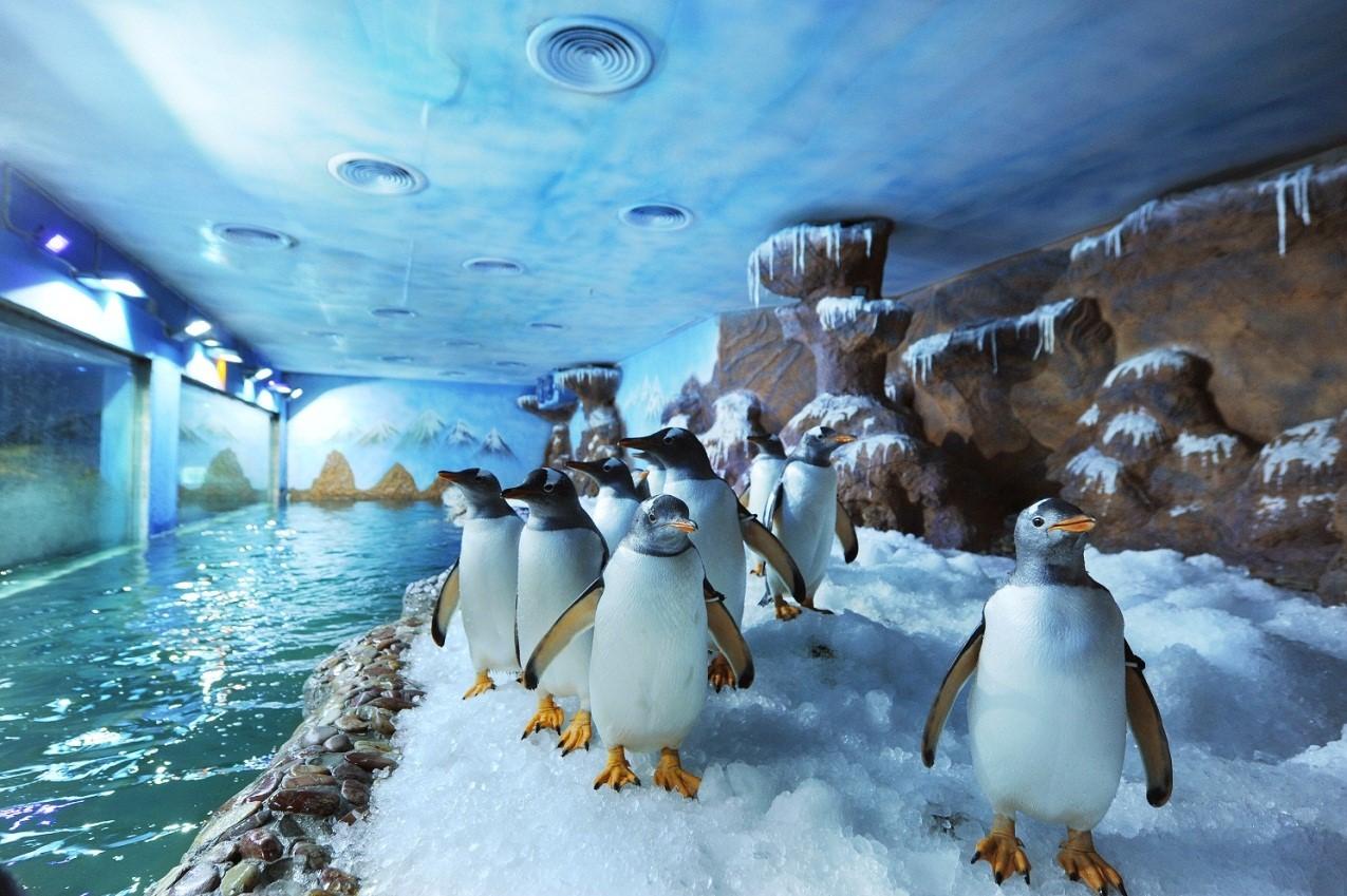Chú chim cánh cụt trong Vinpearl