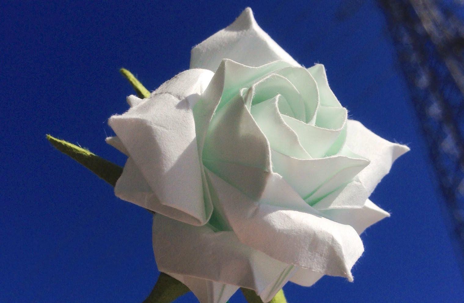 Gần sát nhìn hoa hồng trắng cực đẹp