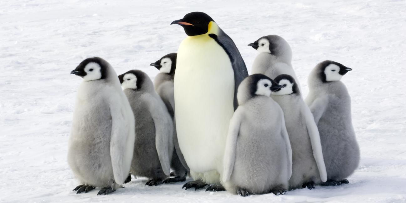 Gia đình chim cánh cụt đứng chụm vào nhau