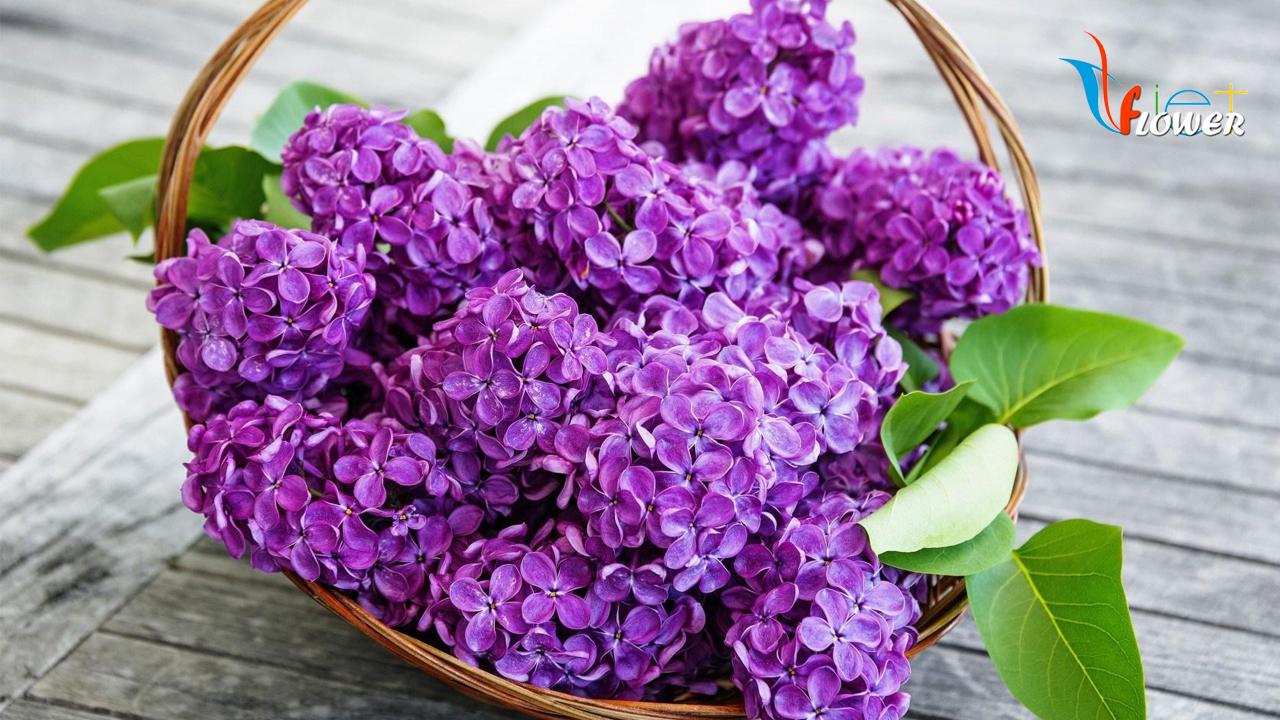 Giỏ hoa tử đinh hương tím cực đẹp