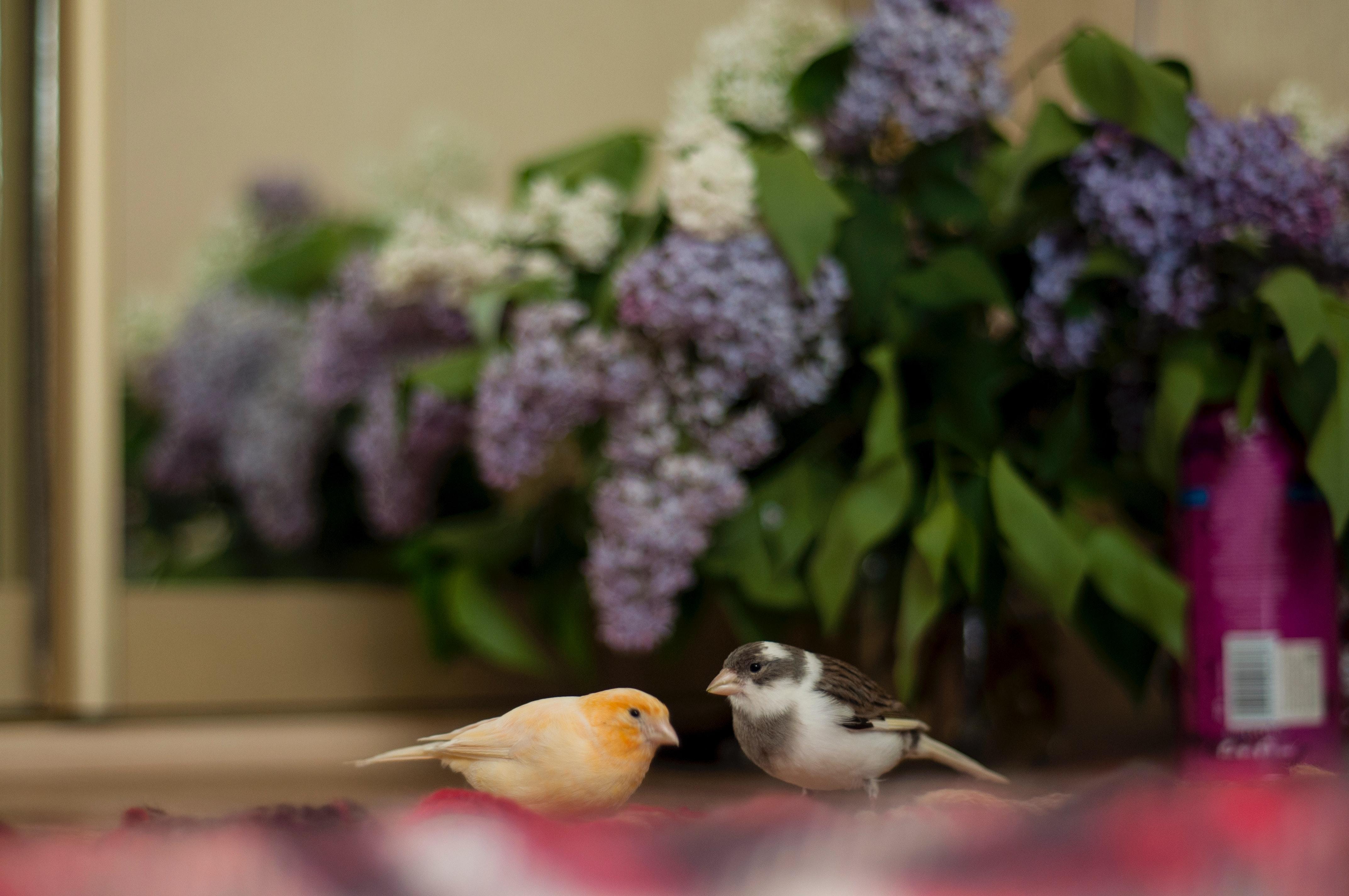 Giỏ hoa tử đinh hương tím nhạt đẹp