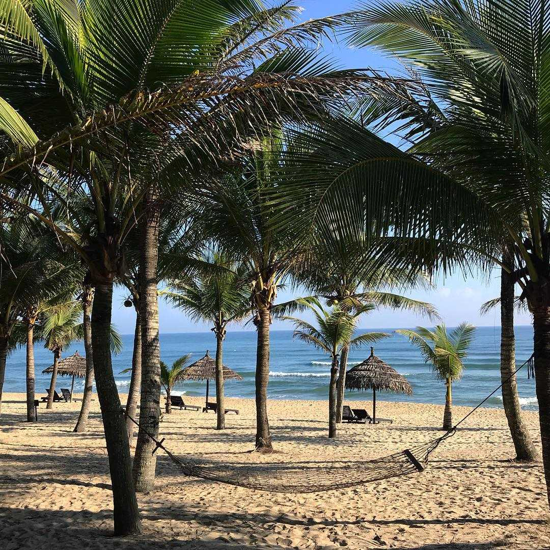 Hàng dừa mắc võng trên bãi biển cực đẹp