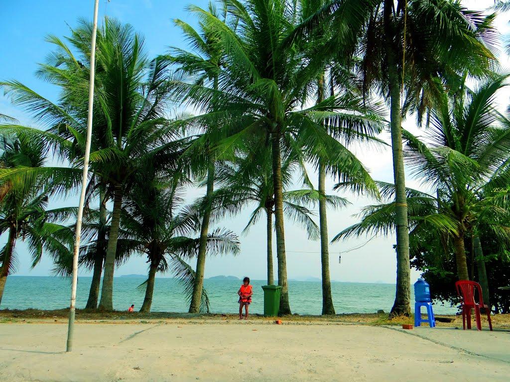 Hàng dừa tán to cực đẹp