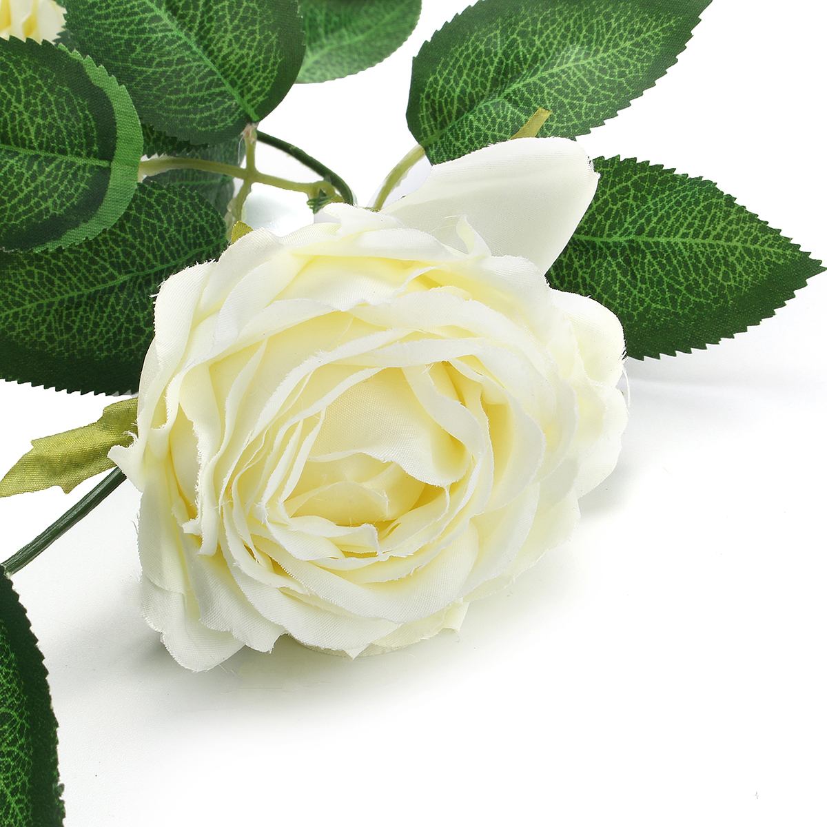 Hình ảnh hoa hồng trắng cực đẹp
