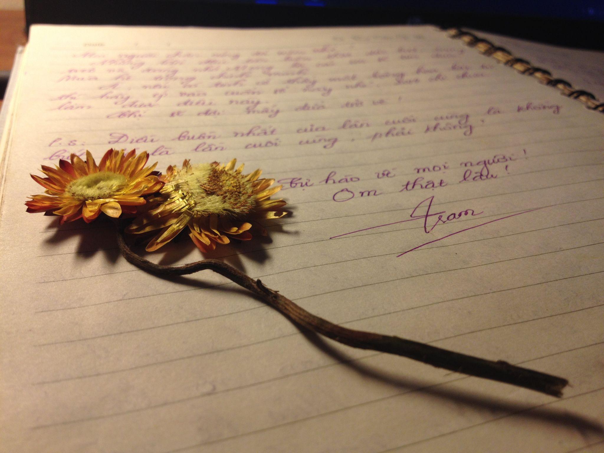 Hoa bất tử ép khô cực đẹp