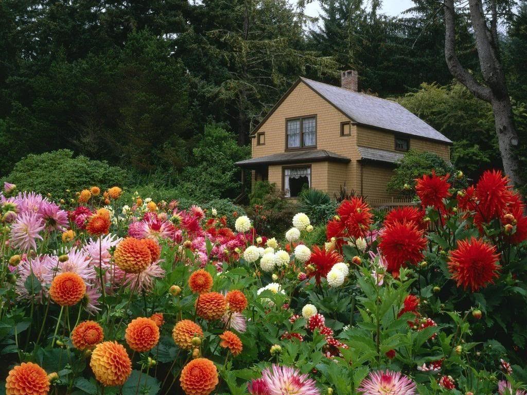 Hoa bất tử mọc rậm rạp nở rộ cực đẹp