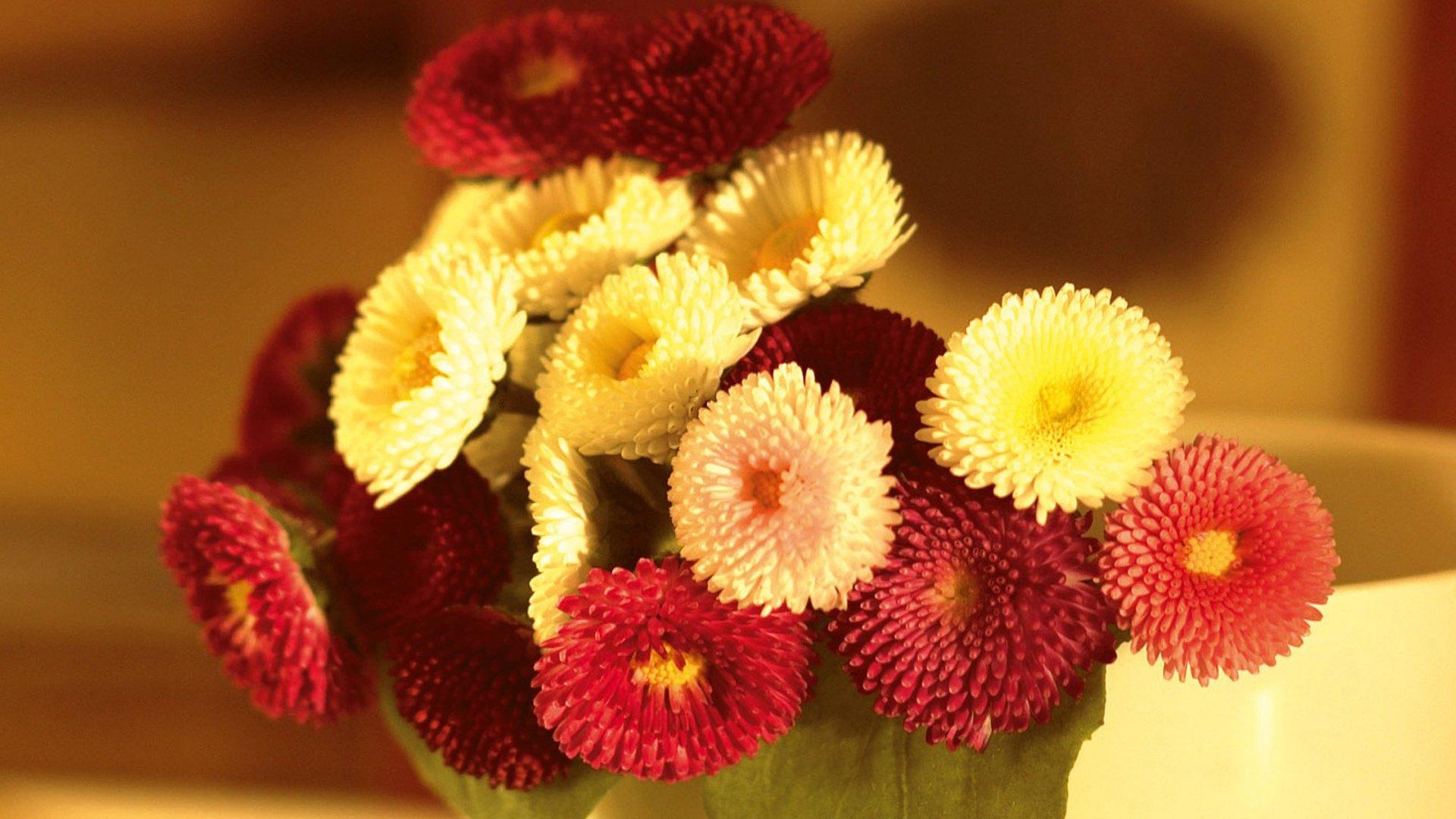 Hoa bất tử nhỏ xinh màu vàng màu đỏ
