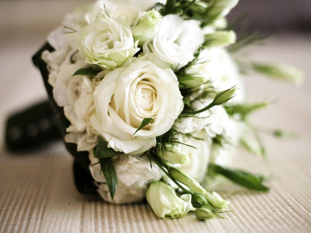 Hoa hồng trắng cực kỳ đẹp mắt