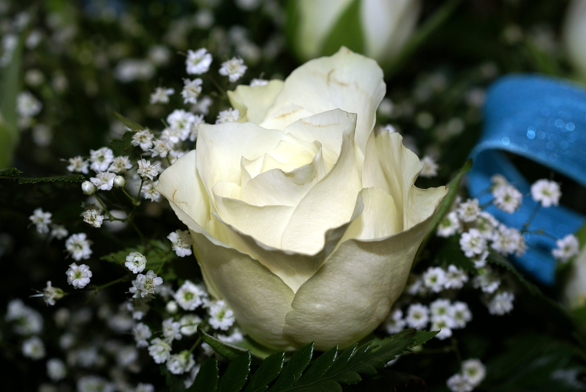 Hoa hồng trắng dùng để tặng ai